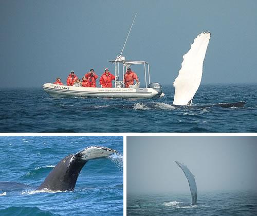 Tiverton, Nova Scotia - whales