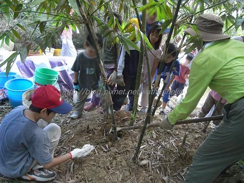 你拍攝的 37娃娃看示範掘竹筍。