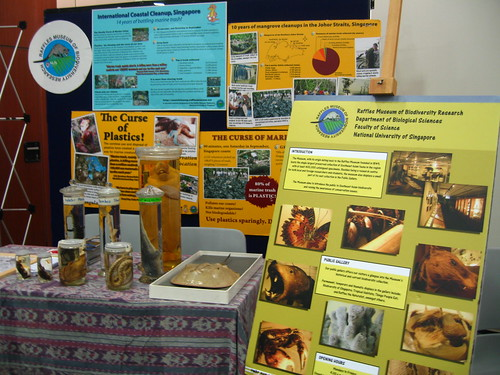 Raffles Museum Toddycats
