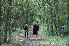 Walking path near Castricum (Jakub Kubista) Tags: walking woods castricum