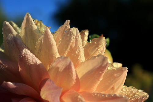 Orange Flower with Dew