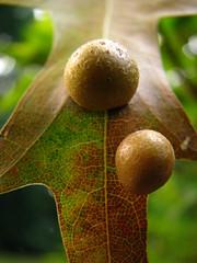 autumn offering