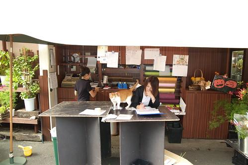 ネコの店員