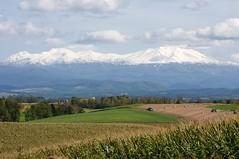 美瑛の丘から旭岳を望む