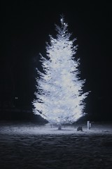 christmas tree in IR (rrmhtml) Tags: ir christmastree infrared