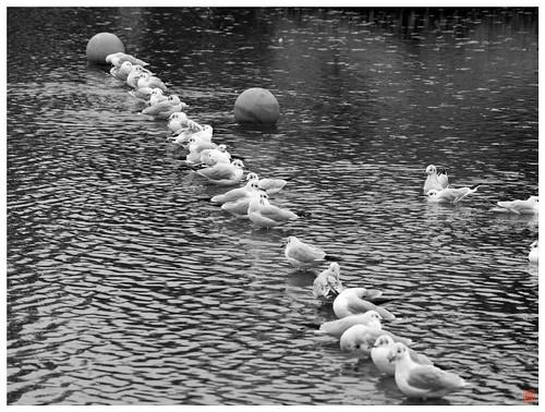 Birds 081211 #01