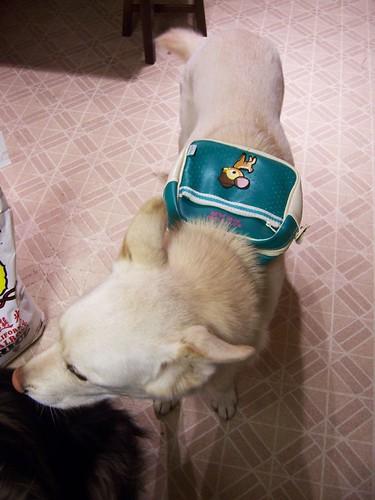 yama with backpack