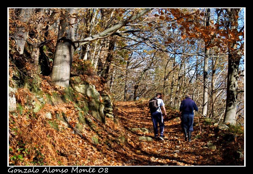 Caminando entre hojas