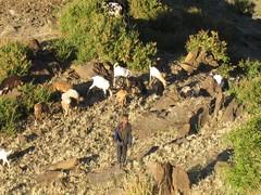 Meket escarpment trek 441 (MikeManning) Tags: travel ethiopia 2008 rtw wollo tesfa meket