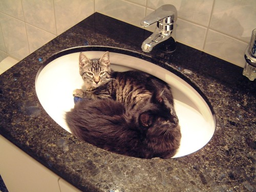 Nera and Tabby in the sink