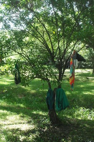 swimsuit tree