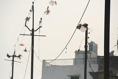 ガンジス河ぞいの電柱。糸の切れた凧が絡まっていた。