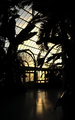 Sefton Park Palm House at Sunset (Daves old pictures) Tags: park uk trees light sunset shadow england plants sun reflection heritage glass liverpool growth botany 2008 biology palmhouse merseyside sefton capitalofculture