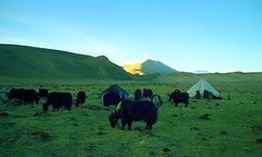 Making camp (reurinkjan) Tags: 2002 yak nikon tibet everest dri tingri jomolangma tibetanlandscape lammala janreurink norrdzi བོད། བོད་ལྗོངས།