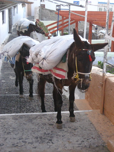 Donkeys in Fira