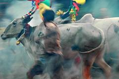 Sankranthi Kichchu Haisodu Bangalore (Ashit Desai) Tags: india festival fire cow jumping south bangalore january harvest bull celebration karnataka pongal sankranti desai makar kicchu mandya ashit