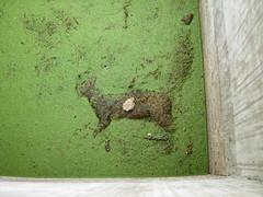 Dead cat (Gunnarmex) Tags: cat dead algae