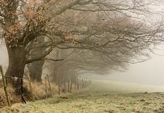 Brouillard matinal (Daniel Schoumakers) Tags: trees nature fog landscape quercus country arbres sensational paysage campagne brouillard clture ineffable saive blueribbonwinner chnes supershot anawesomeshot topofthefog aplusphoto internationalgeographic spiritofphotography danielschoumakers magicunicornmasterpiece sailsevenseas leuropepittoresque