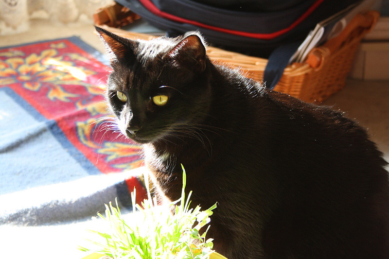 Blacky As My Sunshine Cat!!