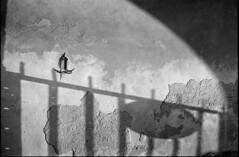 * (rumorebianco) Tags: bw film silhouette wall 35mm shadows decay mantova ilfordhp5plus400 nocrop zeissdistagon3528 contax137