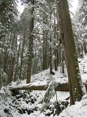 Log over Ravine