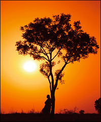 waiting for you.. (bnilesh) Tags: indore mywinners abigfave girlwomensunsetsilhouetteemotiveconceptwaitawaitorangeyellowbackdropshadowblacksingletreealonesolitudeonepersonpeopleexpectinglookingnatureverticallandscapeskysunlightblueribbonwinneramazingamateura