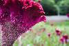 Flor (Gorka Bravo Photo) Tags: naturaleza flower rio garden photo bravo foto janeiro flor prozak jardin caracol gorka fotografo photograher itaipava profesional lorea barraskiloa petroplis argazkiak laguillo argazkilaria natureça prozakme