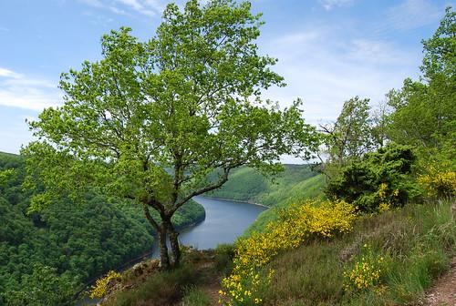 Au fil de la Dordogne 2513343811_e367bd51d3