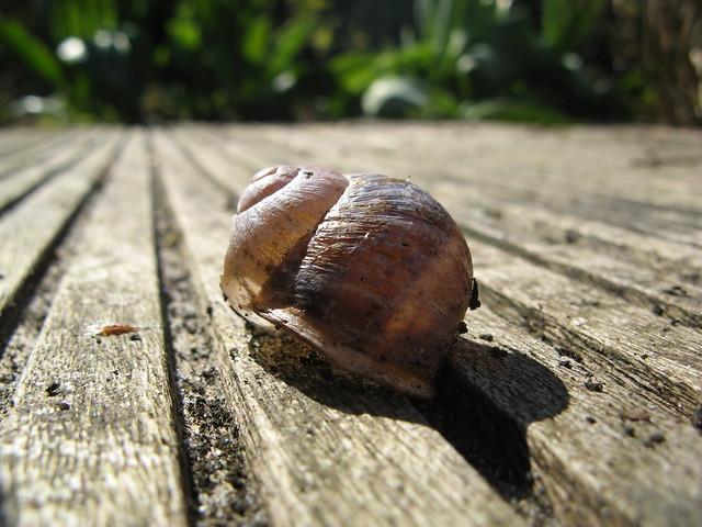 Snail rails