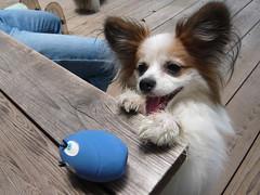 ルル、たまごちゃんで遊ばれるの巻