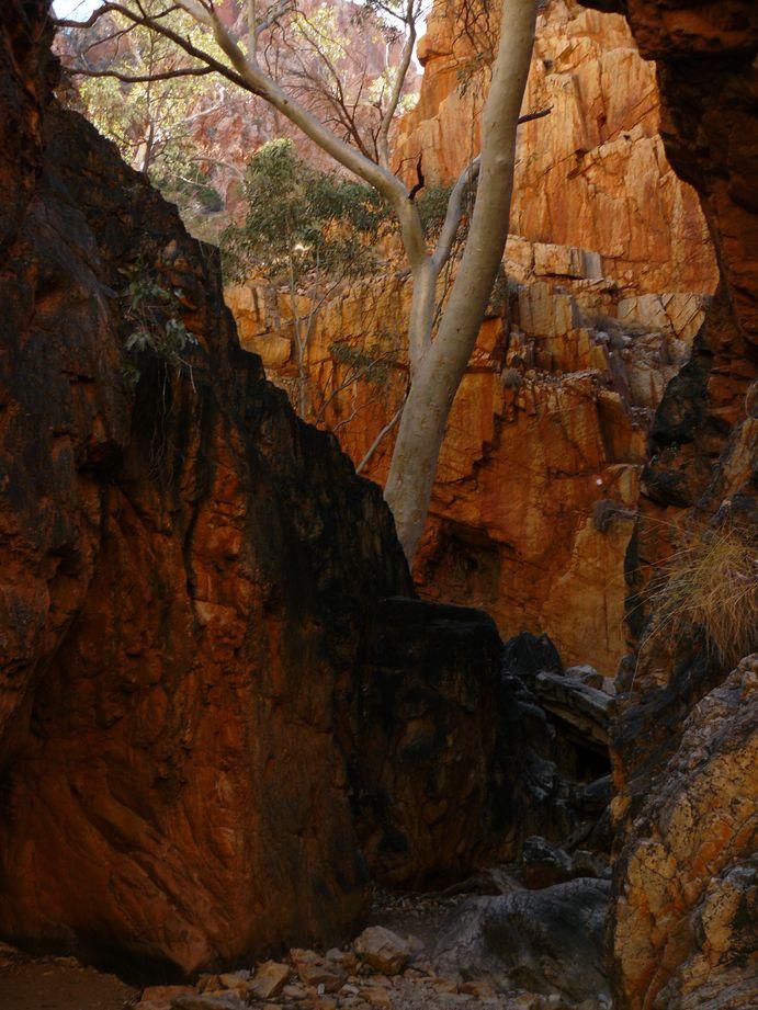 Australie #36 : Standley Chasm #6