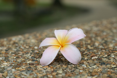 Flower-Fall