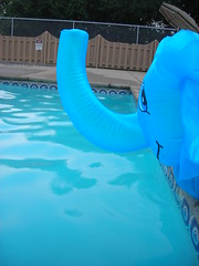 Overseeing (Rrrrred) Tags: elephant pool swimming swim swimmingpool float floatie 1024 poolfloat