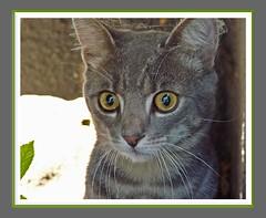 Gerry - Nachbarkatze - kitten of neighbor