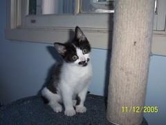 matilda (estelwhen) Tags: lady cat crazy