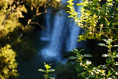 Whangarei Falls (Tikipunga, Auckland, New Zealand) Photo