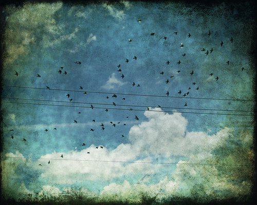 wanderlust (birds with telephone line 1099)