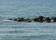 A Perch In The Lake (gonisj) Tags: seagulls lake beach water swimming sand rocks erie rockybeaches
