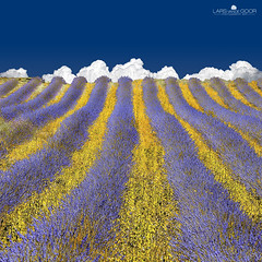 Lavender Heaven (larsvandegoor.com) Tags: blue white france color field yellow clouds landscape purple lavender giallo provence lavanda top20colorpix lavenderfield 1000faves colorphotoaward larsvandegoor magicunicornverybest aboveandbeyondlevel1