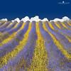 Lavender Heaven (larsvandegoor.com) Tags: blue white france color field yellow clouds landscape purple lavender giallo provence brilliant lavanda top20colorpix lavenderfield 1000faves colorphotoaward larsvandegoor magicunicornverybest aboveandbeyondlevel1