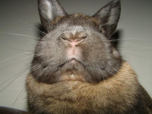 Bunny Mouf!