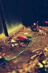 abandoned (CharlaneG) Tags: abandoned broken sad christmaslights nostalgia secretgarden