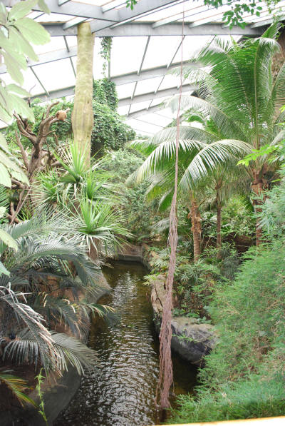 rainforest_1