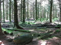 (sourwine) Tags: sunlight forest moss hiking sunbeams wicklowmountains deepinthewoods wicklowway neardjoucemountain