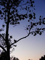 Yin Yang (Carissa Andrea) Tags: life trees death serene yinyang yingyang