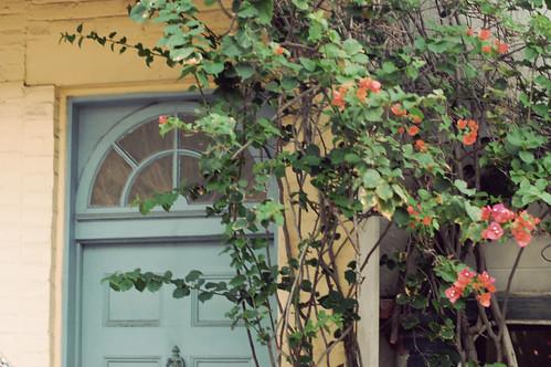 Blue door and vine