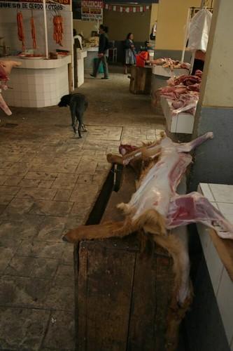 Poor llama! Potosi meat market.