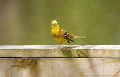 3_F (pangpong[bz]) Tags: bird nature nz tauranga kenko14xtc 400d pangpong 70200f4nonis