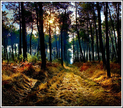 BRETAGNE - Broceliande - The forest ... (philippe MANGUIN photographies) Tags: sun france forest way lights bretagne breizh foret sunlights broceliande paimpont hdrenfrancais