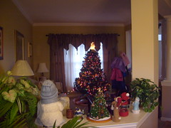 Christmas Tree in Late Afternoon